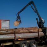 eucalyptus-to-pulpwood-11