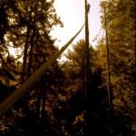 salvaged-wood-06
