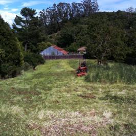 Tall Grass Mowing