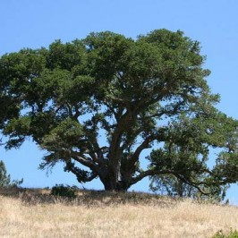 Marin County tree cutting ordinance